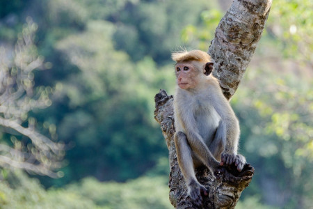 https://www.sla.org.uk/control/uploads/images/natural/300/contained/monkey~1577951112.jpg